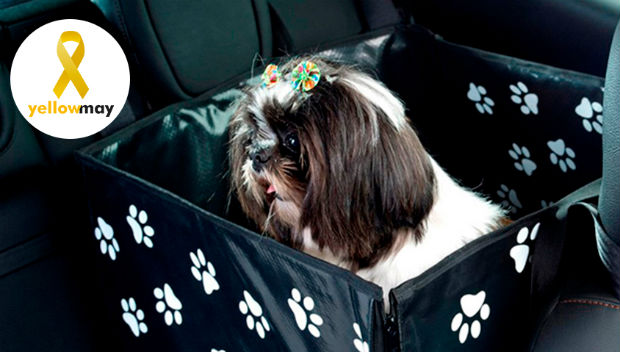 Transporting pets in your car